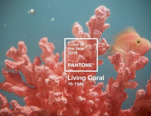 Pantone Anounces Living Coral as the 2019 Color of the Year 2019 Color of the Year Pantone Announces Living Coral as the 2019 Color of the Year Pantone Anounces Living Coral as the 2019 Color of the Year 5 600x460